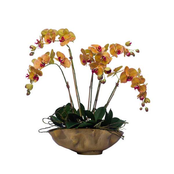 Phals in Gold Metal Bold