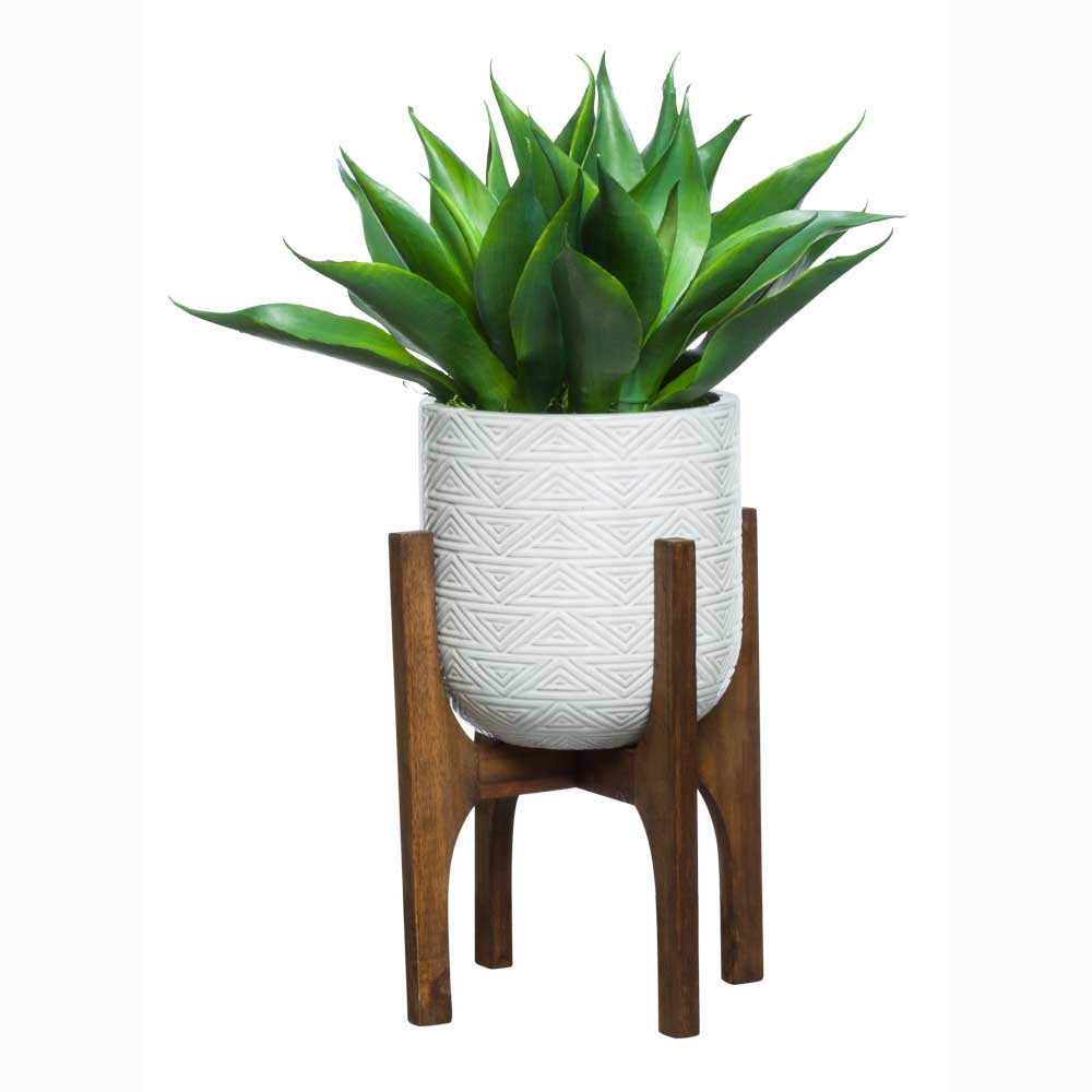 Agave in Glazed Planter